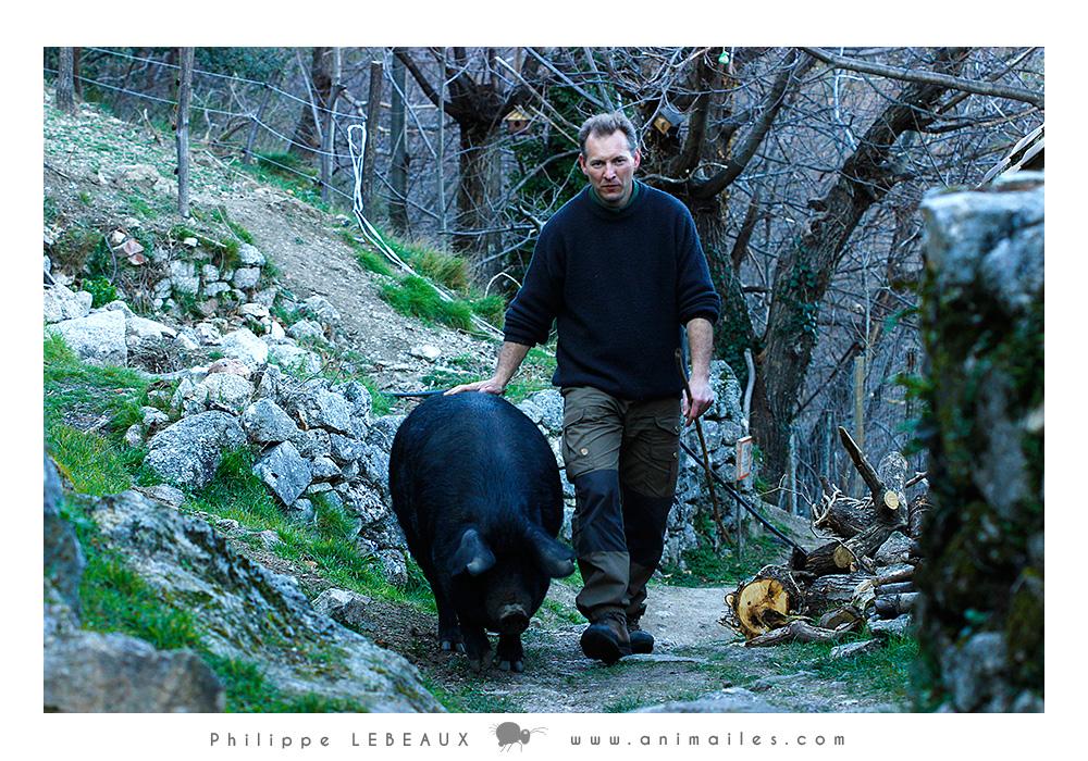 Philippe ramenant Telma à la porcherie