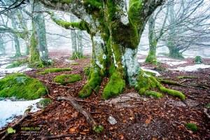 Lingas, Les gardiens de la forêt