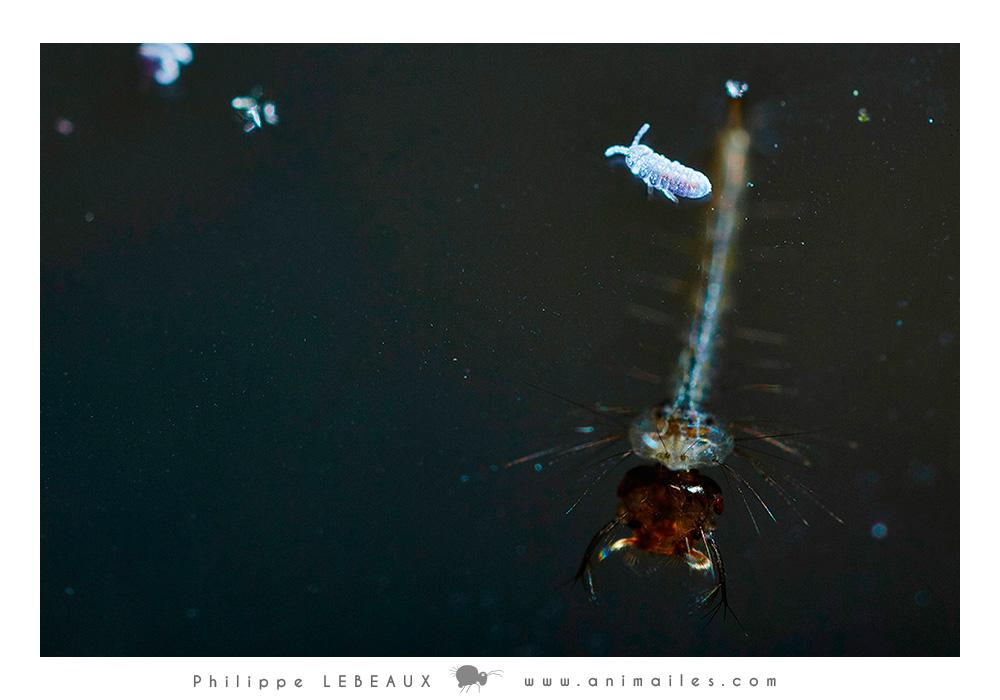 Aquatique01