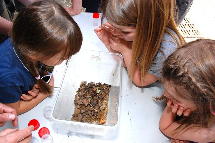 Stage Nature 8-10 ans Pour les curieux de nature au CIN du Grand Moulin
