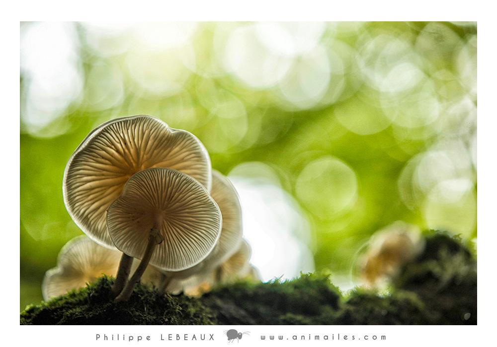 Forêt01