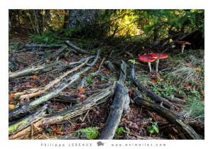 Forêt11