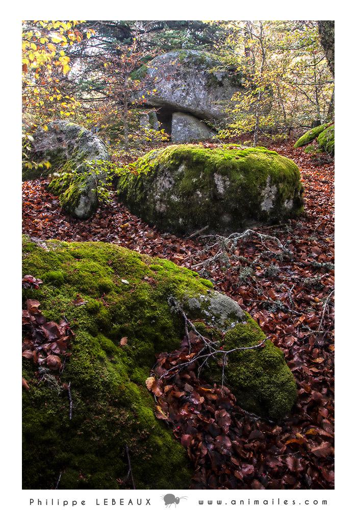 Forêt16