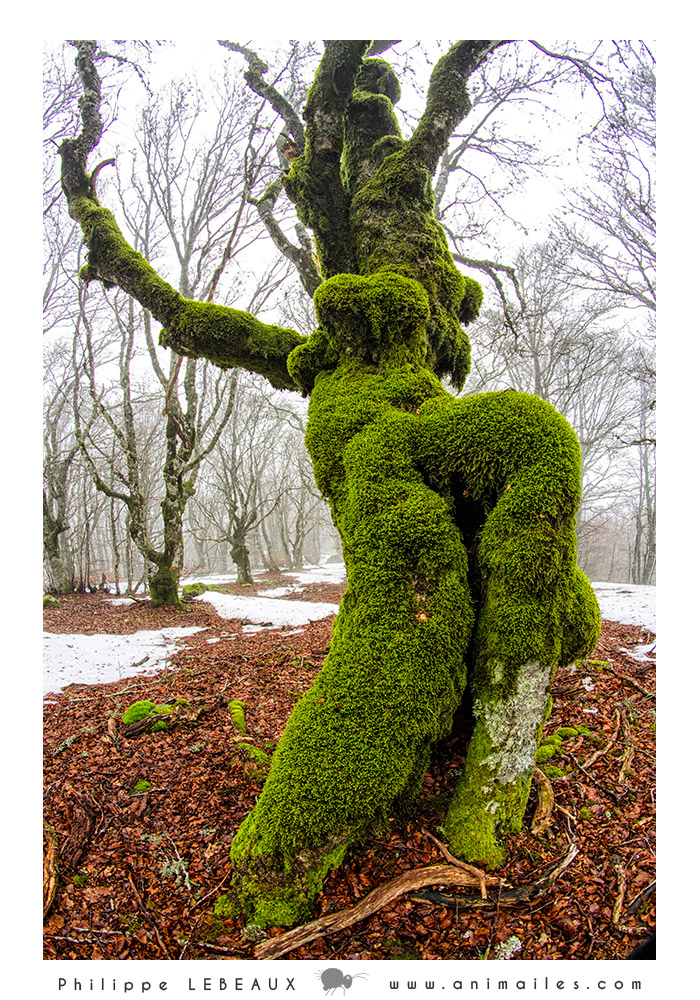 Forêt18