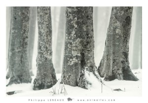 Forêt29