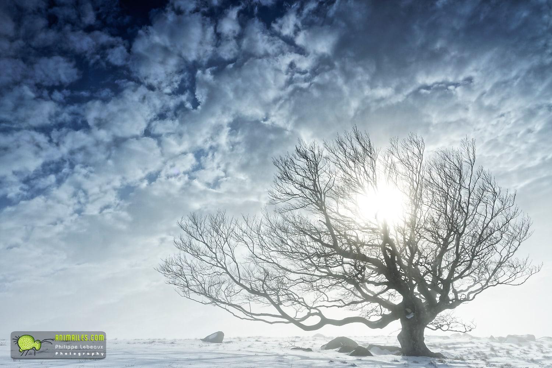Lingas, hêtre et soleil