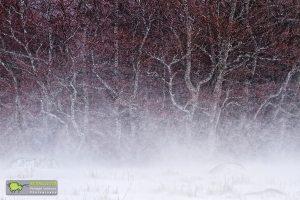 Lingas, Brume et forêt de hêtres