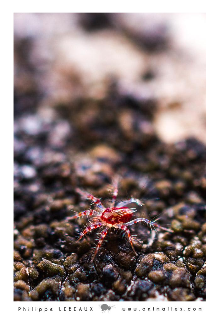 microfaune10