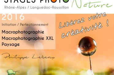 Stages Photo Nature – Macrophotographie – Macrophotographie XXL – Paysage