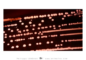 Bactérie sp.