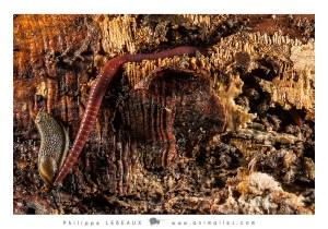 Vers de terre, limace et collembole