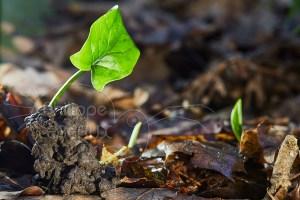 Turricule de ver de terre