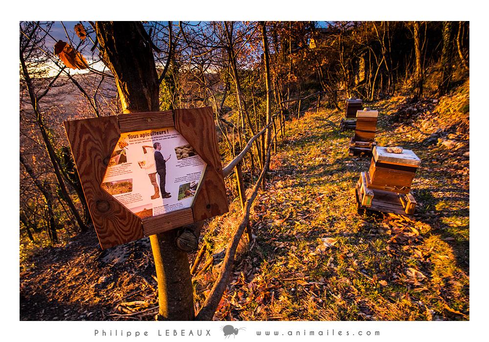 Sentier pédagogique sur les abeilles au hameaude Pratcoustal