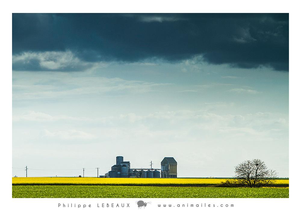 Champs de colza et silos a grains (Touraine)