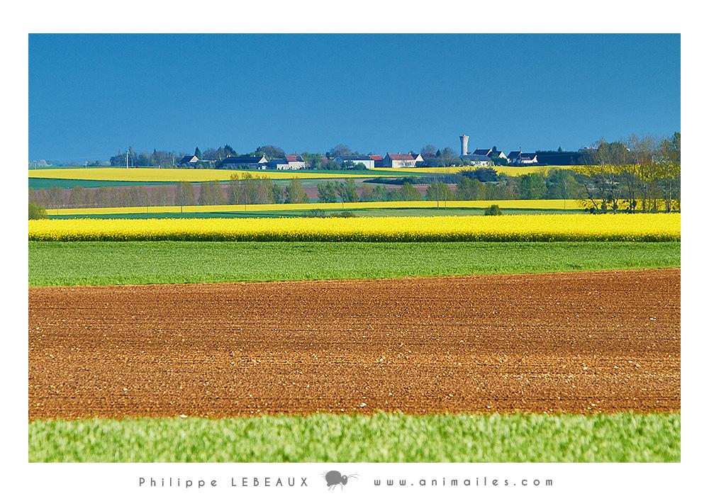 Champs labouré et champs de colza (Touraine)