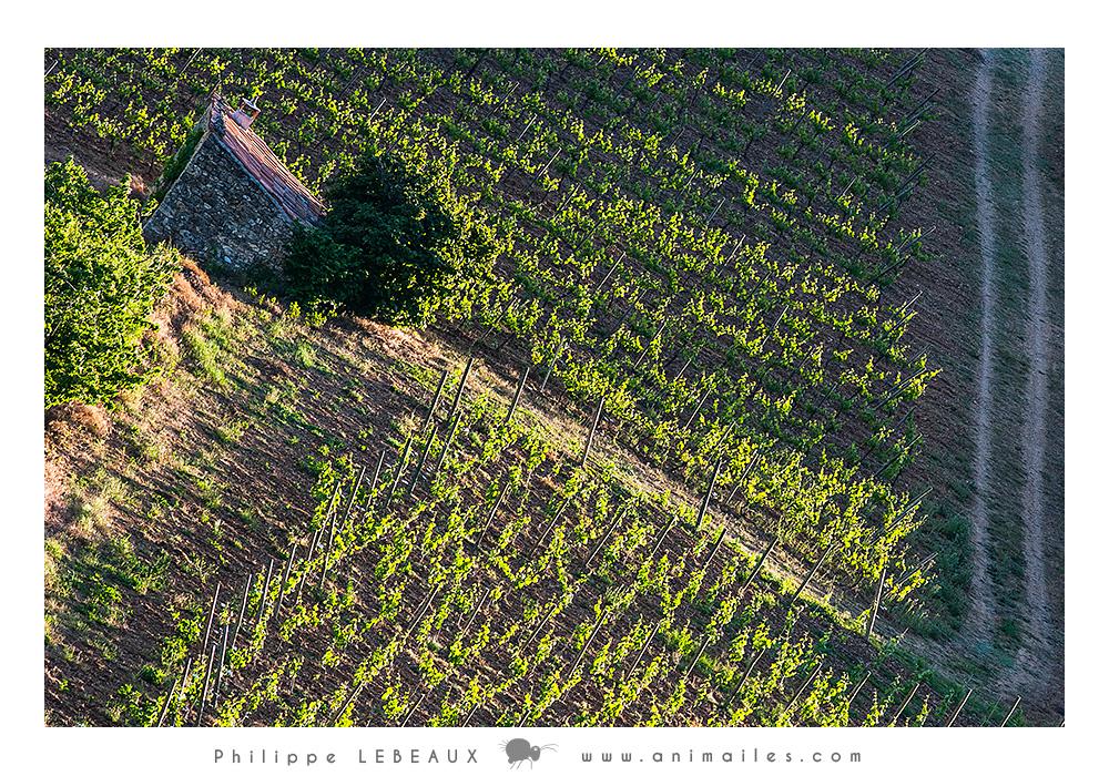 Vigne en région drômoise