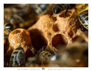 alvéoles ouvertes et abeilles