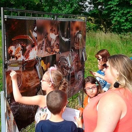 Cette exposition, qui permet une participation active du public, se propose de faire découvrir de manière originale et artistique une partie de cette faune du sol et du compost, si utile et pourtant méconnue.