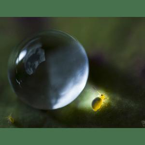 Tirage Planète Collemboles sur bois laminé 6mm