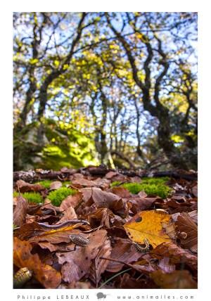 Montage litière forestière et faune du sol