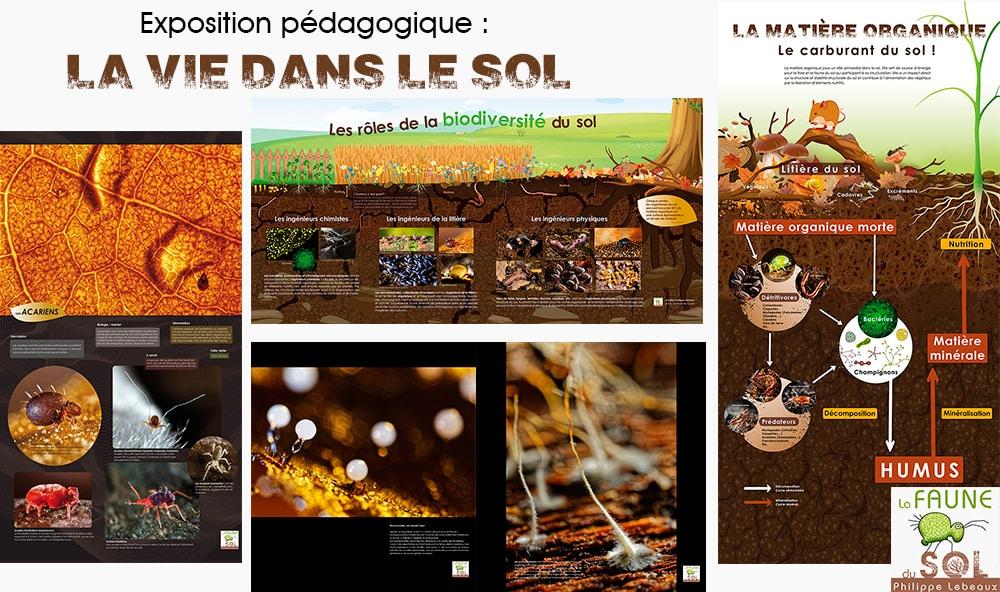 Visuel panneaux pédagogique La vie dans le sol