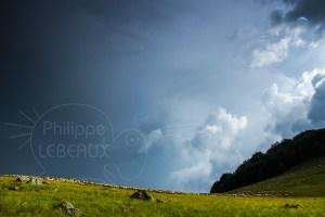orage avec troupeau de monton et berger