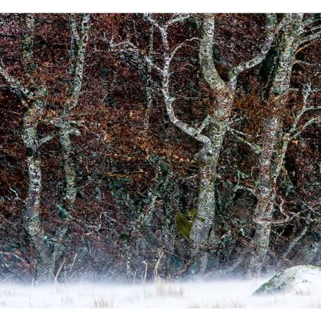 Tirage photo Fine Art Forêt du Lingas 50x75cm