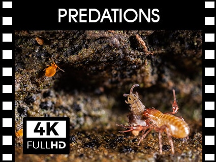 Vidéos sur la faune du sol prédatée