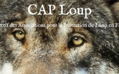 Qui protégera le loup en France si le ministre de l'écologie ne le fait pas ?