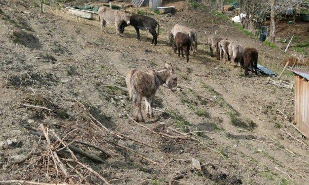 Condamnation d'un éleveur de Saint Gervais