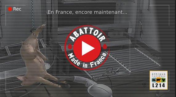 Video sur l'abattoir du Gard : signez la pétition de L214 !
