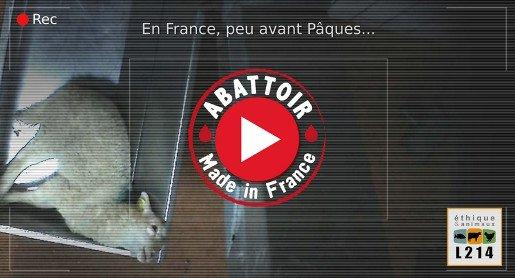 Communiqué de presse : procès de l'abattoir de Mauléon le 17 et 18 septembre