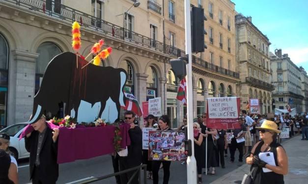 A Bayonne, procession mortuaire pour les taureaux