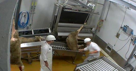 Animal Cross partie civile aux côtés de L214 dans le procès de l'abattoir du Vigan.