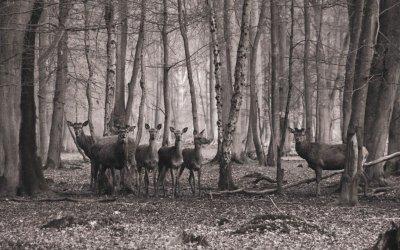 """Office National des Forêts (ONF): le plus grand """"tour operator"""" de la chasse en France"""