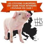 Victoire : plus de 1.5 millions de personnes se sont mobilisées pour interdire l'élevage en cage en Europe !