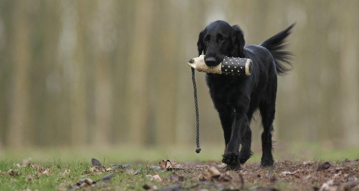 Le dressage pour la chasse : une éducation à la violence