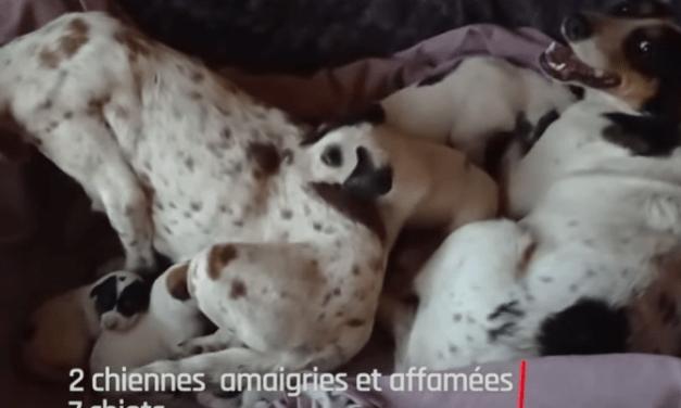 11 chiens sauvés d'une vie misérable !