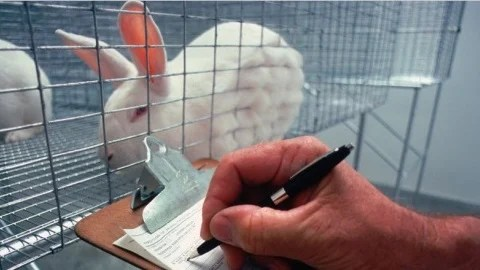 rabbit in a cage in a lab with human taking notes
