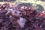 落ち葉に埋もれるワンコ