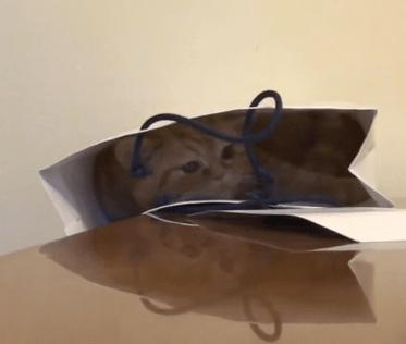 テーブルの上の紙袋に入ったネコ