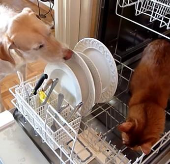 アニマル食洗機