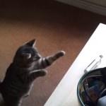 電動カミソリに強力な猫パンチを繰り出すネコ