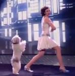 ダンスの天才犬
