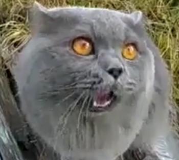何かを伝えたいネコ