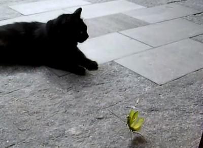 ネコ vs.カマキリ