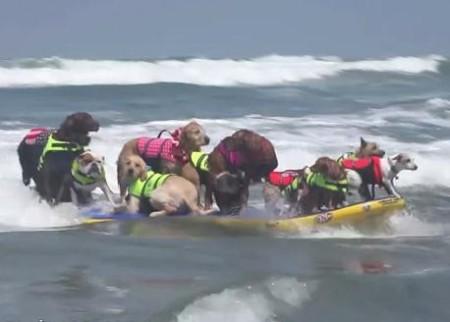 14匹のワンコがサーフィン同時乗り世界記録
