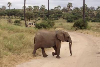 道路を横断する3頭の象。3番目に横断する象に注目!