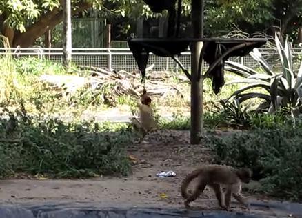 回転して遊ぶサル