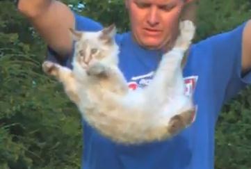 背中から落下するネコが反転する瞬間を撮影